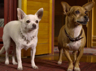 Dining Family Style - Beverly Hills Chihuahua