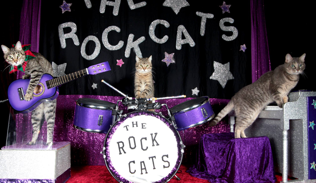 Rental Event: The Amazing Acro-cats Bounce into Baltimore!