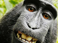 Copyright Law and the Monkey Selfie: The Crested Macaque as Author?  w/ Christopher J. Lyon